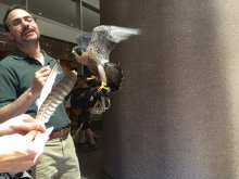 Guest star Artemis, peregrine falcon ambassador from the Raptor Center, and naturalist Mike.