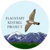 flagstaffkestrels's picture
